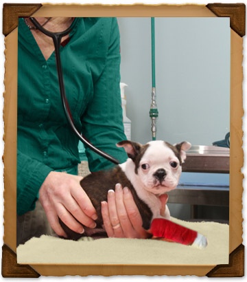 Emergency Veterinary Care in O'Fallon