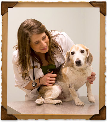 Pet Wellness Services at Bryan Road Animal Hospital